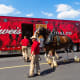 3. Budweiser, U.S.2020 brand value: $6.4 billion2019 brand value: $7.6 billion