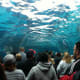 18. St. LouisEntertainment and Recreation Rank: 27Nightlife and Parties Rank: 16Cost Rank: 23Pictured is the 35-foot underwater tunnel at the St. Louis zoo.Photo: Shutterstock