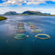 Greenhouse gas emissions per kilogram, in CO2 equivalents: 5Pictured is a salmon farm in Norway.