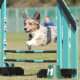 This is a fun competitive sport you can do with your dog, in which you direct your dog through an obstacle course within a time limit. The courses usually include tunnels, weave poles, tire jumps, seesaws, and pause tables. Any type of dog can learn, and you, as handler, do your own share of running, so it's good exercise. The American Kennel Club has Covid-19 guidelines for tournaments, and how to get started training.