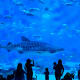 The Georgia Aquarium in Atlanta, pictured, is the largest in the world with over 100,000 animals, including everything from whale sharks to African penguins. The city has unique neighborhoods with great food and Southern culture. The Atlanta tourism site offers a guide where you can learn more about local Black heroes, iconic restaurants, entertainment, and more.