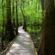 Congaree National Park, pictured, preserves the largest tract of old growth bottomland hardwood forest left in the U.S. Columbia has lots to do for nature and outdoors enthusiasts, a lively food and drink scene, festivals year-round and good local shopping