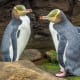 Dunedin is your chance to see rare yellow-eyed penguins in the wild, fur seals and the world's only mainland albatross colony.Read more about these destinations at TripAdvisor.