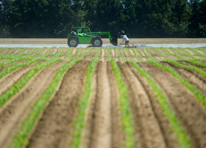 Migrant workers do maintenance at an asparagus farming facility in southwestern Ontario that experienced a COVID-19 outbreak. THE CANADIAN PRESS/Nathan Denette