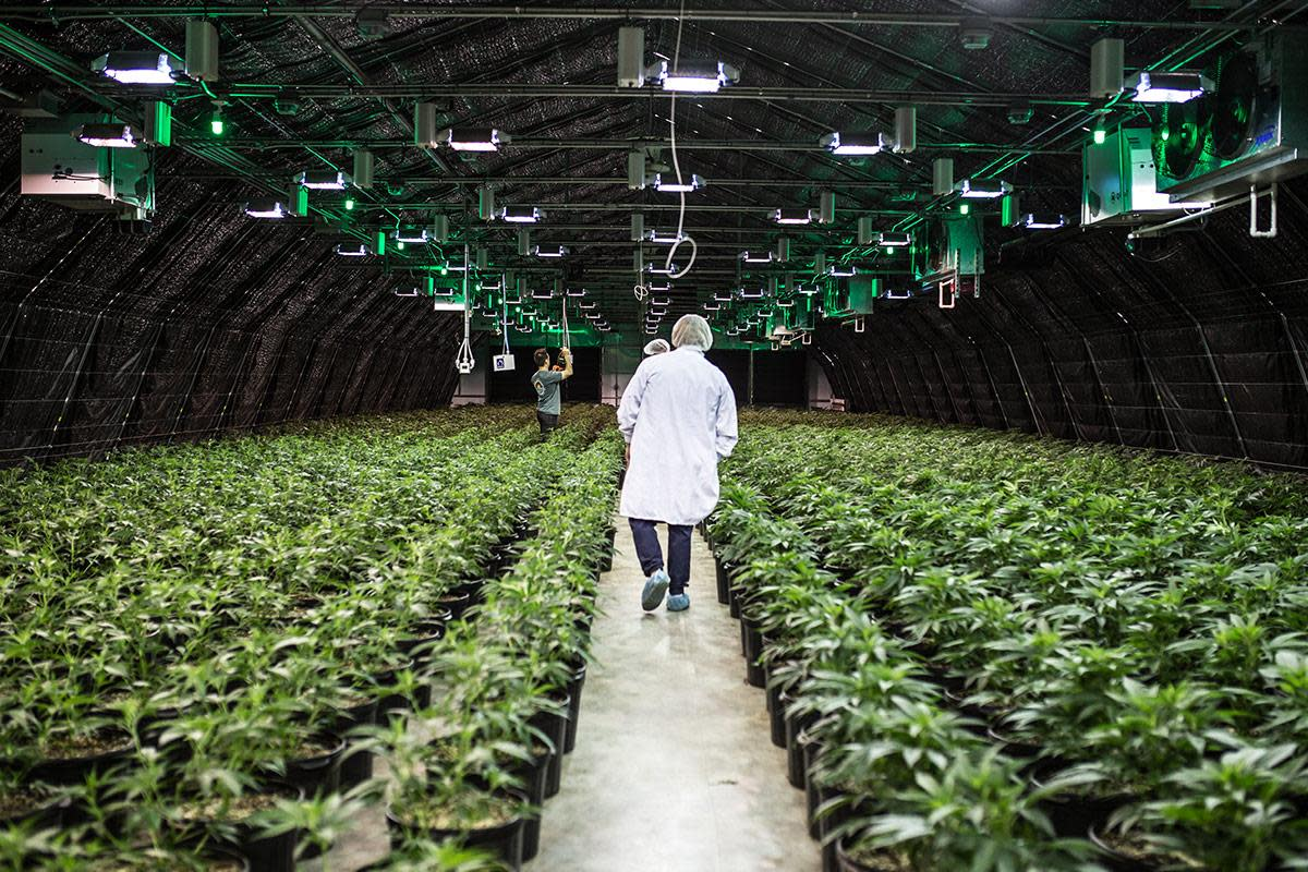 Sundial Sued for Failing to Disclose Bad Batch of Cannabis