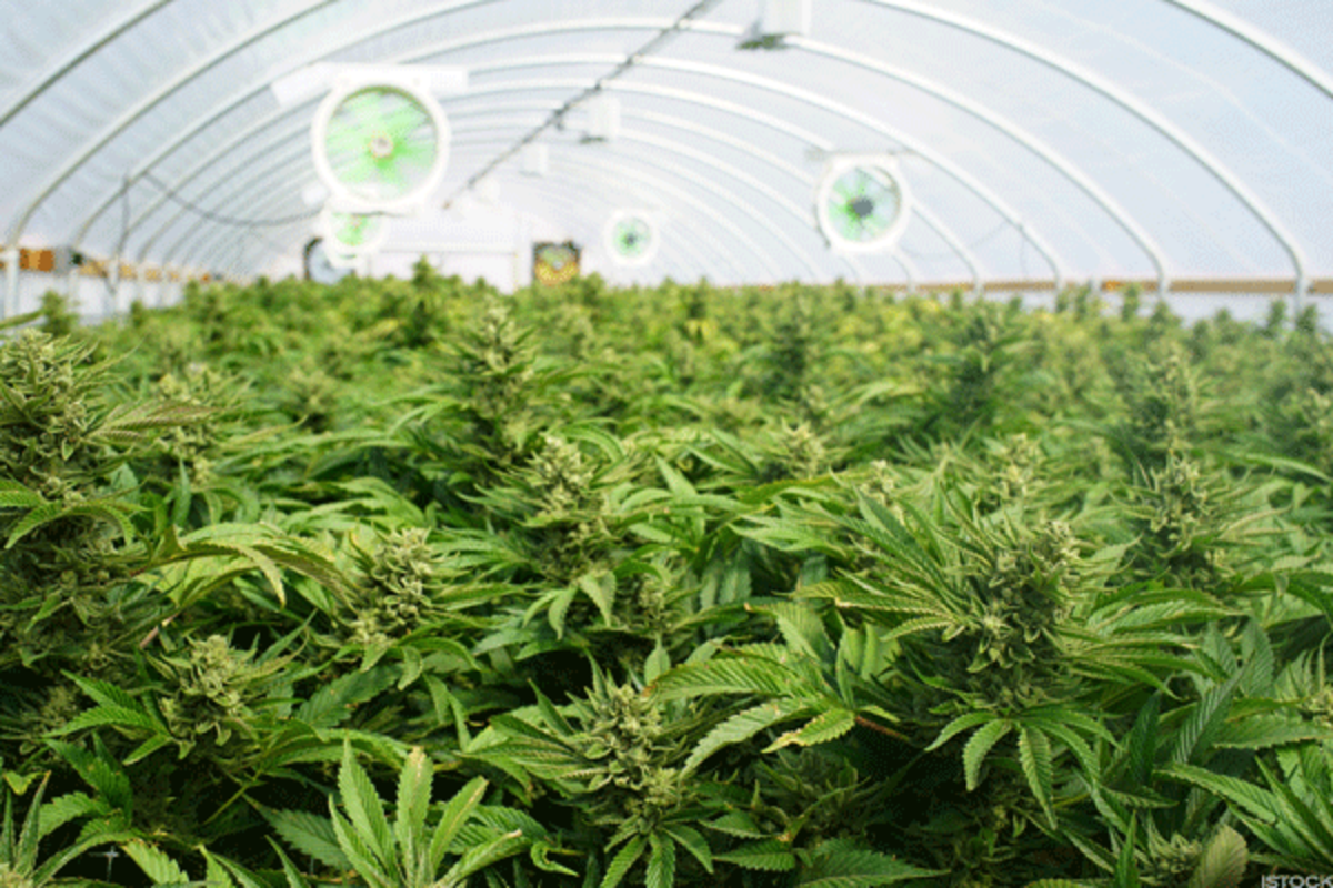 Canada's legal marijuana business is booming, while the U.S. lags behind.