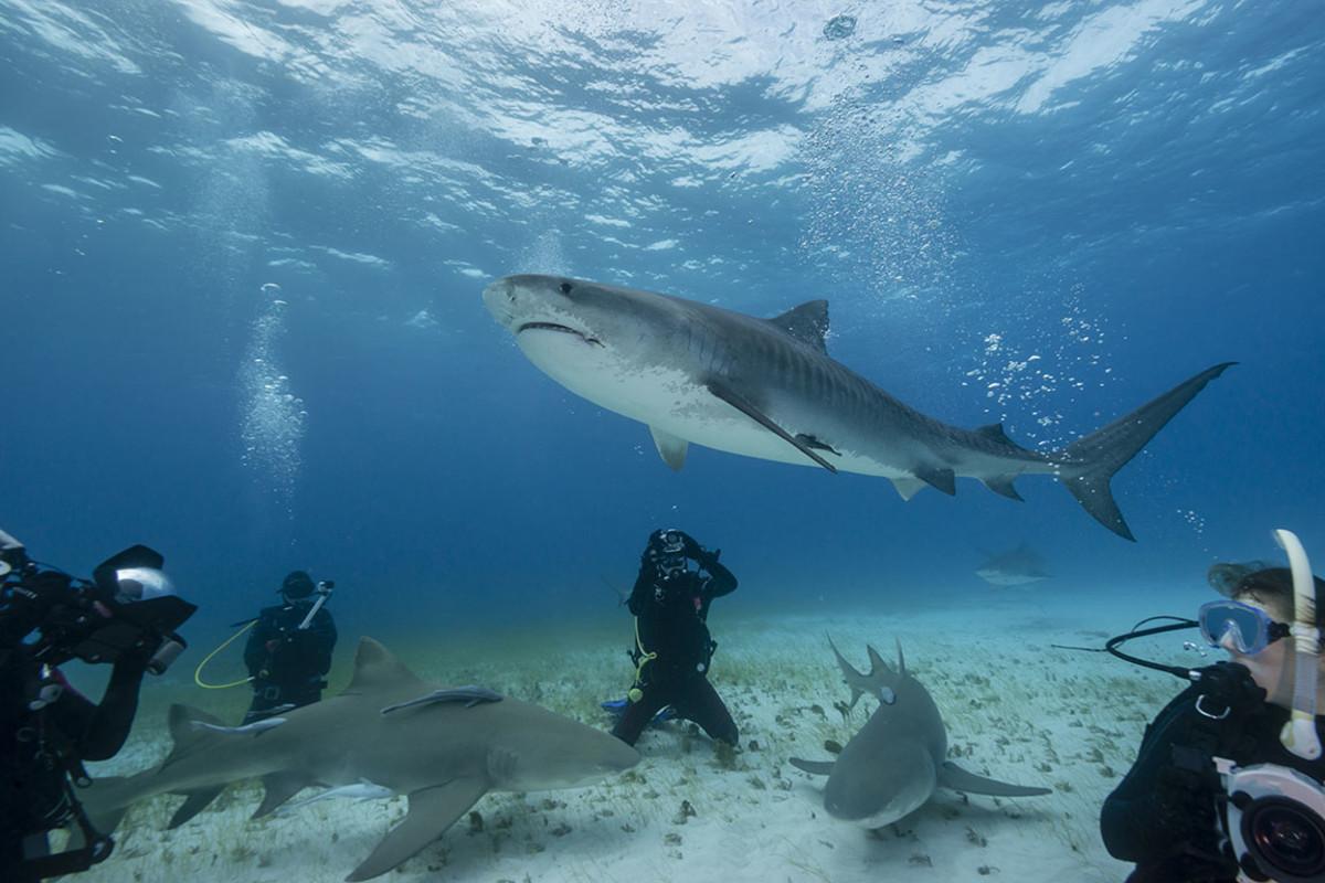 21 swim sharks sh