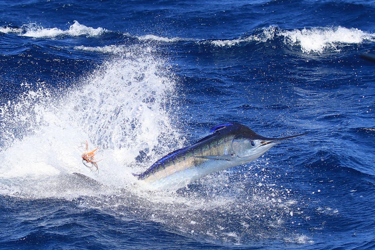 29 deep sea fishing sh