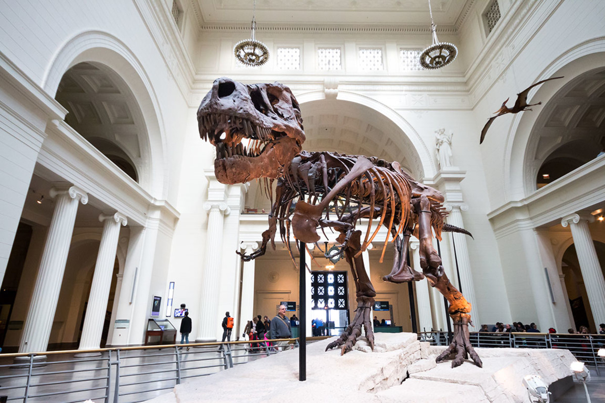 27 chicago field museum Busara : Shutterstock