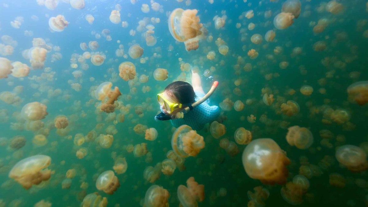 28 Jellyfish Lake Palau sh