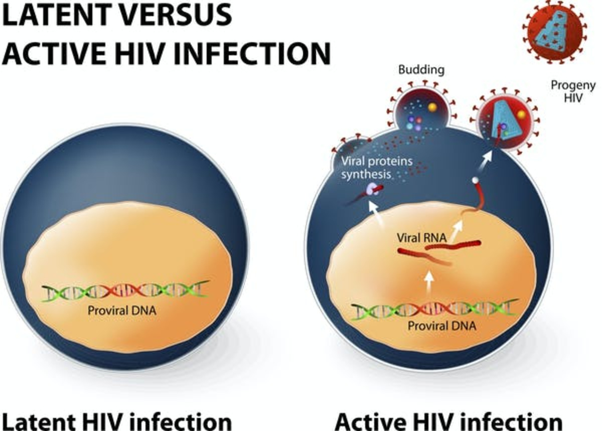 Latent infection (left) is when a cell is infected and the virus has inserted its genetic code into our human DNA. The immune system cannot detect this cell as being infected. An HIV infection can shift from latent to active if the infected cell is producing new viruses. ttsz / Getty Images