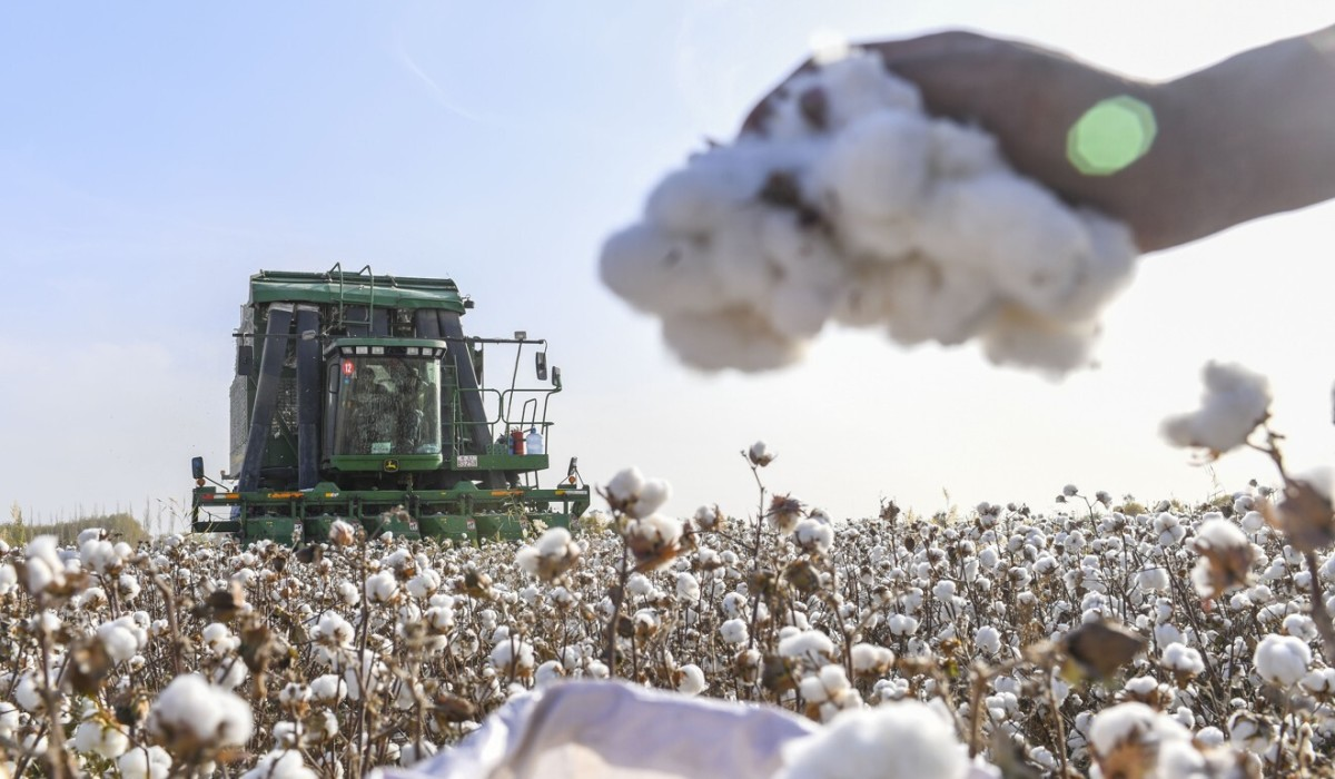 Xinjiang dominates China's cotton production and XPCC produced about 2 million tonnes of it in 2018. Photo: Xinhua