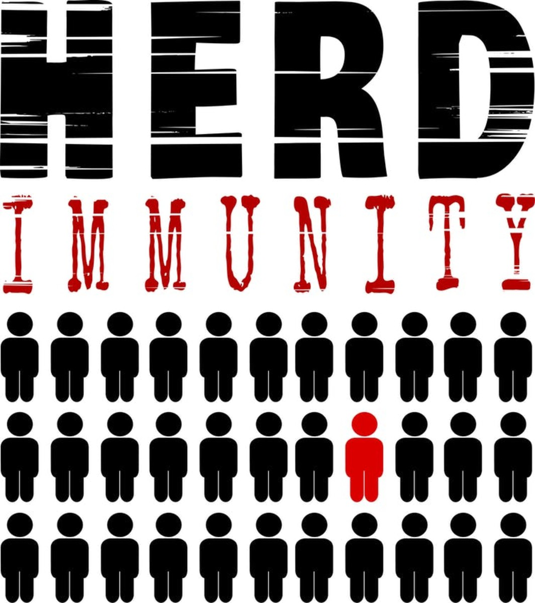 Herd immunity results when the majority of the population gains immunity to the virus either through vaccination or infection. When this happens, vulnerable people who cannot get vaccinated are protected by the 'herd.' smodj/iStock/Getty Images Plus