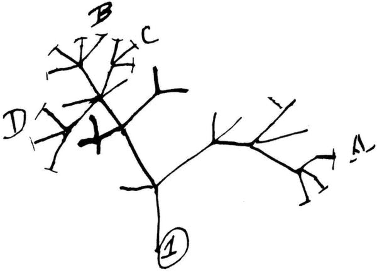 Charles Darwin's first diagram of an evolutionary tree, drawn in 1837. Cambridge University Library