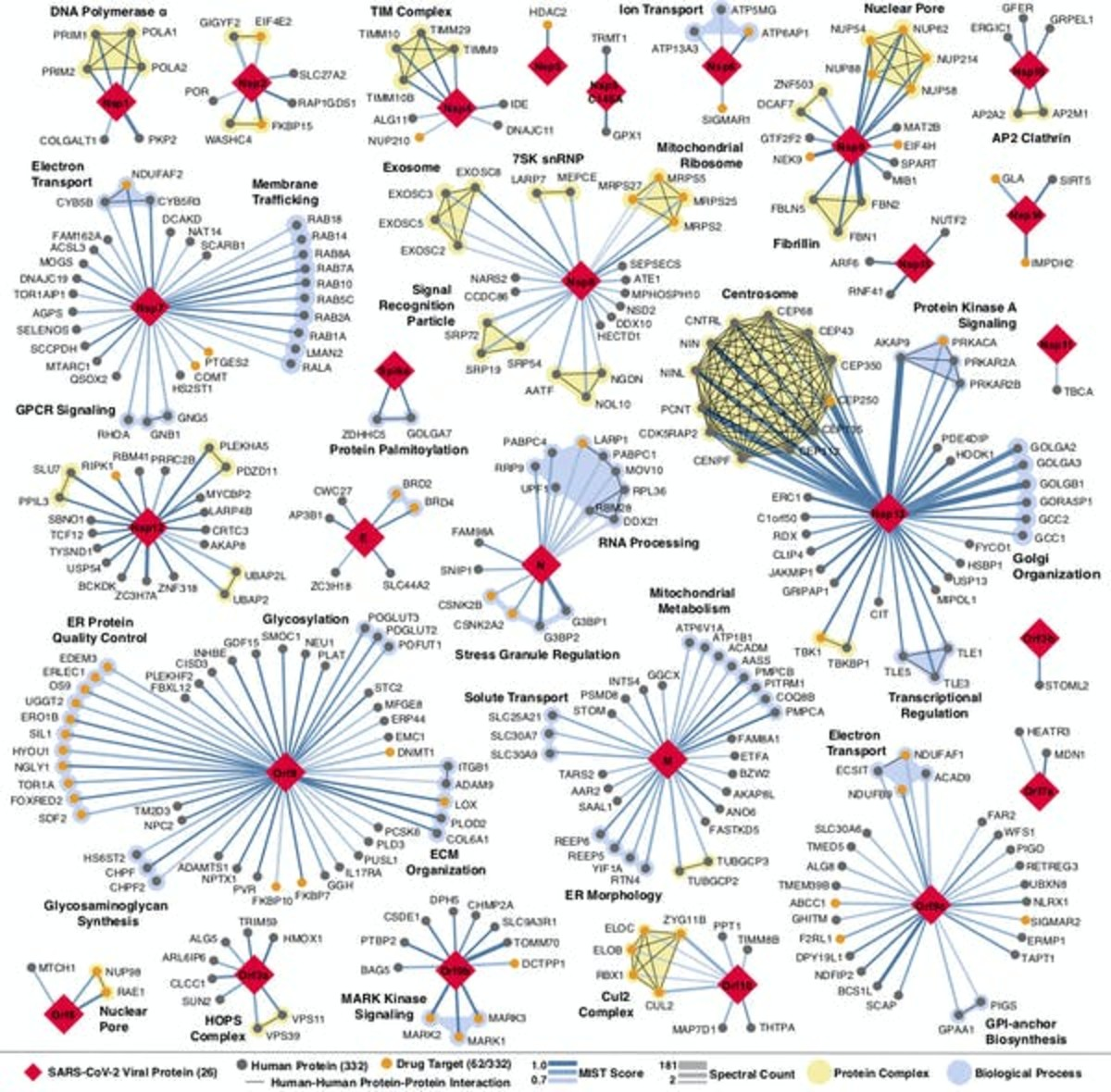 Every place that a coronavirus protein interacts with a human protein is a potential druggable site. QBI Coronavirus Research Group, CC BY-ND