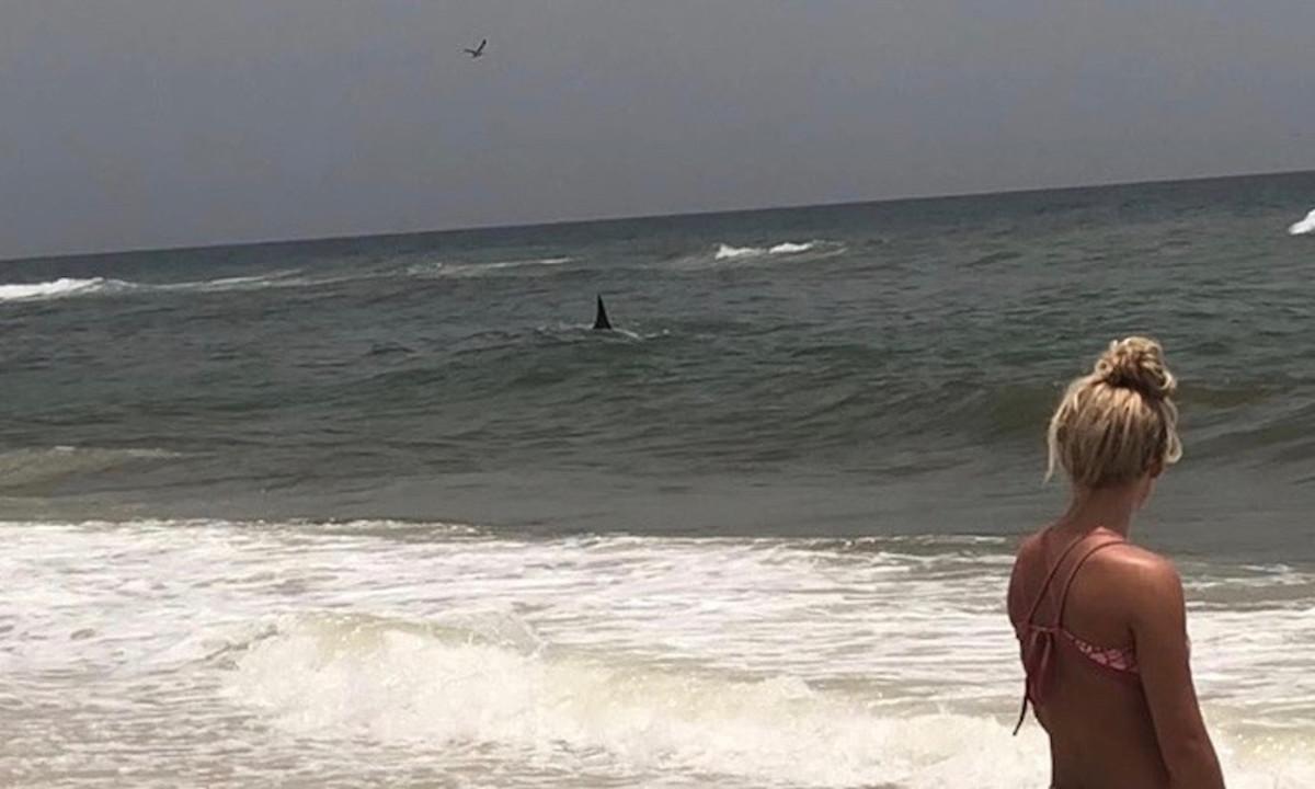 shark-feature
