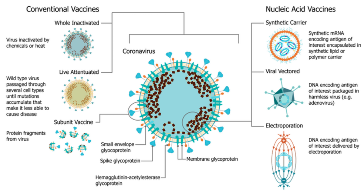 Researchers can build vaccines based on a number of what they call platforms – different technological ways to safely introduce your immune system to the targeted virus. Blakney AK, Ip S, Geall AJ. An Update on Self-Amplifying mRNA Vaccine Development. Vaccines. 2021; 9(2):97., CC BY