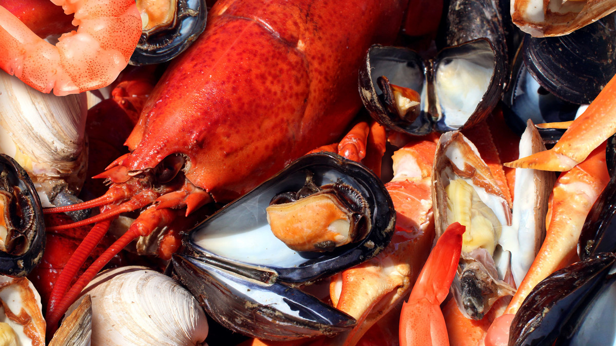 Shellfish Lead